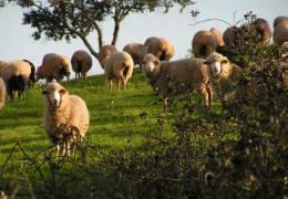Ovibeja 2019 vai debater contributos dos agricultores para reverter alterações climáticas